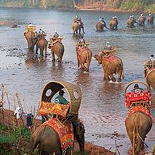 Caravan of the elephants through Northern-Laos