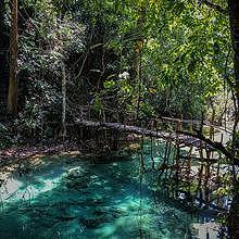 Many paths through a jungle with turquoise water