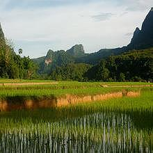 Sunset on ricefields during a 1 day trek to Ban Na