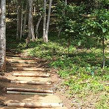 Paths through jungle and forest in a protected area