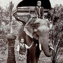 Old postal card of a royal elephant