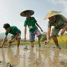 Living Land : the rice field and the organic farm