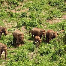 The herd walking wildly in the protected park