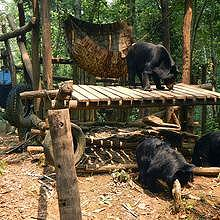 Park for rescue bears in Kuang Si Waterfalls