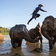Jumping elephant flash in Sayaboury at Elephant Conservation Enctre