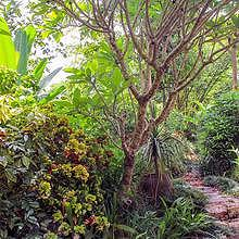 Little trek in a tropical garden facing the Mekong River