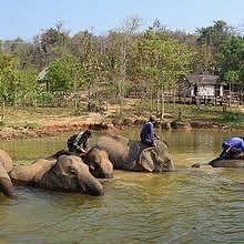 Family bathing at the Elephant Conservation Center of Sayaboury