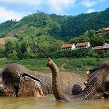 The elephant camp at Pakbeng - Northern Laos
