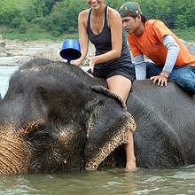 Ride or not riding elephant ?