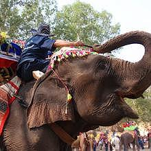 An elephant during the festival in february