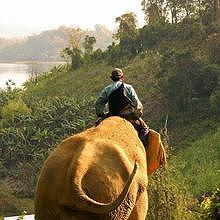 Elephant ride on the bank of the Mekong River, in Luang Prabang