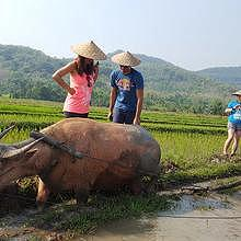 Living Land: an organic farm on the ricefield